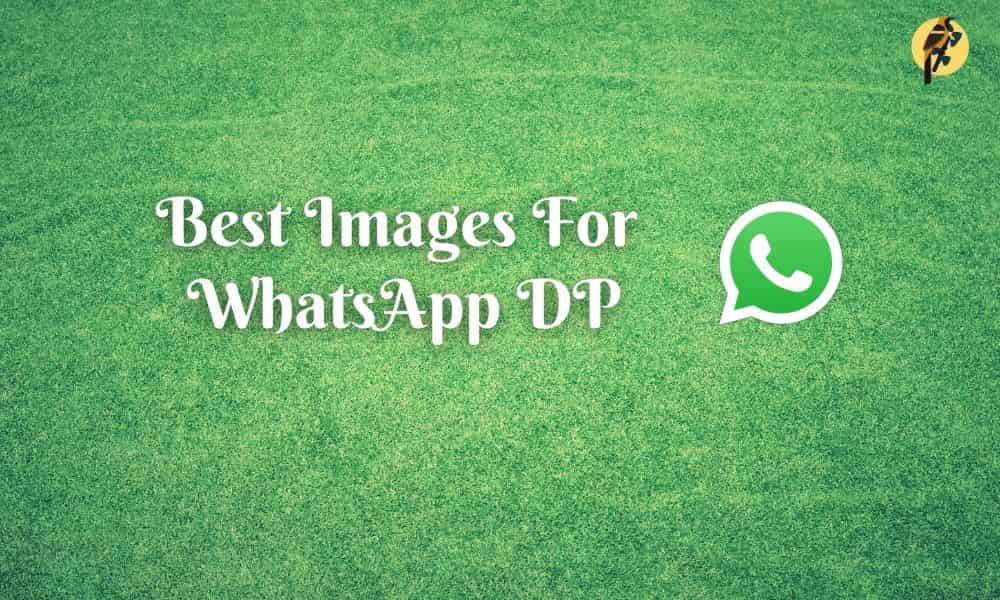 best images for whatsapp dp